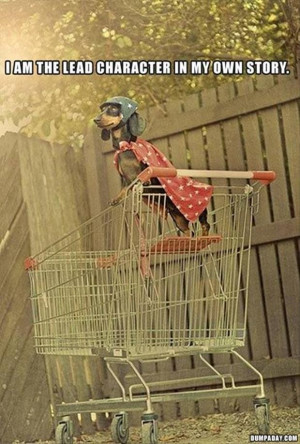 funny superhero dog