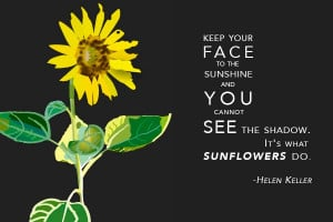 Sunflower with quote. Available in postcard to poster size prints.