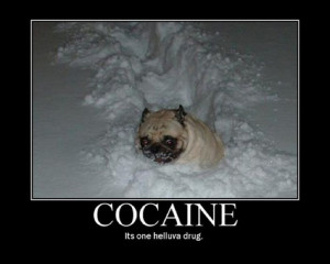 Funny captions accompany humorous photos,funny dog pictures with ...