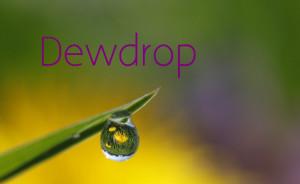 Dew Drop | Dew Drop | Dew Drop | Dew Drop