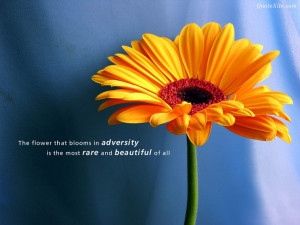 The Flower That Blooms in Adversity – MORE INFO