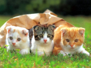 ... cute funny kitten picture very cute cat and kitten picture cute white