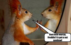 Funny Squirrel (92)