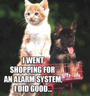 Too cute. Kitten and German Shepherd Puppy. LOL..... from Beautiful ...