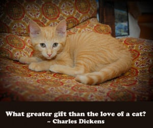 Cat Quotes: Charles Dickens