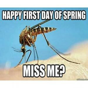 Happy first day of springMiss me?