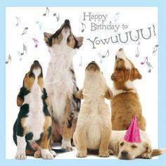 ... birthday birthday cards birthday dogs birthday greeting dogs happy