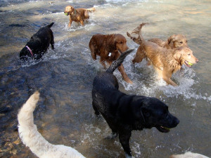 Currently, there are 12 dogs in the WCC training program. WCC has a ...