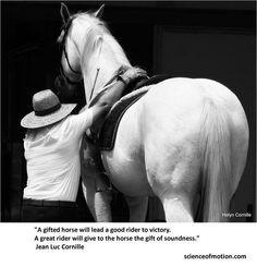 horse more riding quotes gift horses hors wisdom exquisite equine ...