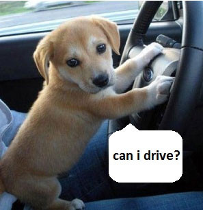 cute animals with sayings puppy can i drive 9gag