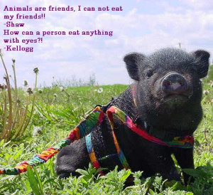 animals are friends i can not