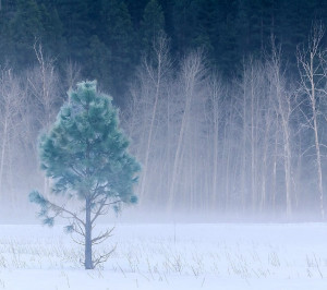 Tumblr Winter Quotes Winter tree