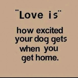 That's why i love my dogs
