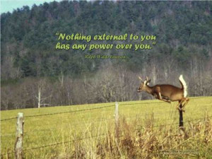 Wallpaper Quotes~~~~~ 102 - Deer Jumping over fence.