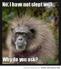 funny monkey quotes sayings funny monkey quotes sayings funny monkey ...