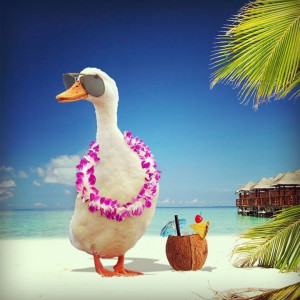 Aflac! Aflac!