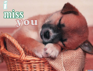 Miss You Funny Dog Miss you quotes hd wallpaper