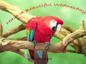 Scraps Happy Wednesday Quotes Flash Facebook