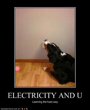Funny Dog Pictures Electricity Learning