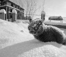 awn-cat-frozen-sad-snow-so-cold--73781.jpg