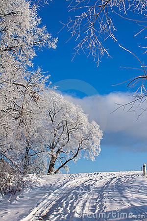 Beautiful Nature Winter