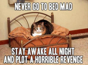 Funny cat – Never go to bed mad