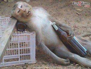 Drunk Monkeys Funny