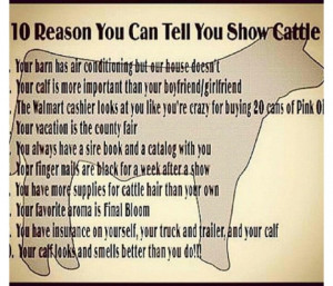 Its official, I show cattle!