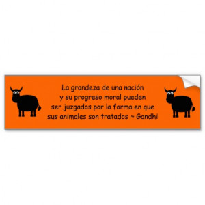 Gandhi Animal Rights Quote In Spanish Bull Car Bumper Sticker