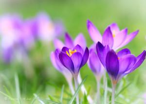 spring_flower_by_raylau-d4rremu.jpg#spring%20flower%201024x731