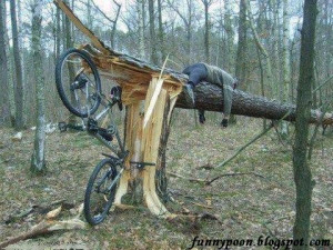 Tree Fell Down After Hitting The Bicycle - Funny Accident