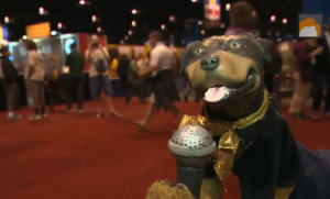 Triumph the Insult Comic Dog Visited The Great American Beer Festival ...