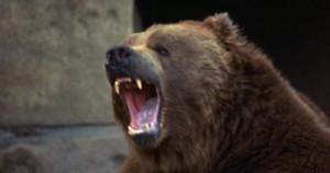 anchorman bear fight