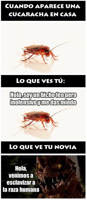 Imágenes divertidas de Cucarachas