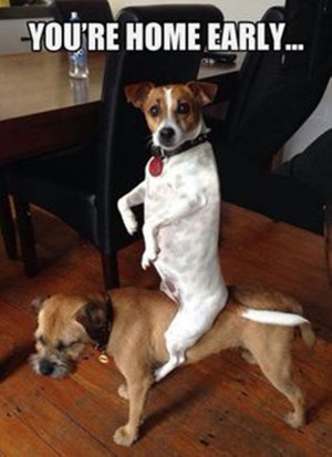 Funny Dog Pictures with Captions You Should Never Miss Today