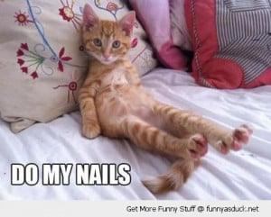 cute cat lolcat animal feet paws do my nails bed lying funny pics ...