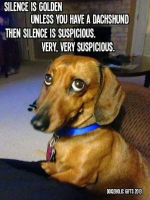 Dachshund Dog Silence Golden Meme Joke Picture = Silence is golden ...