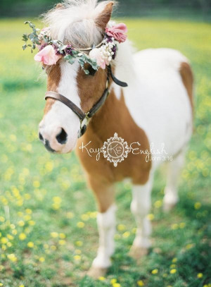 mini horse for wedding see more about mini horses wedding bride and ...