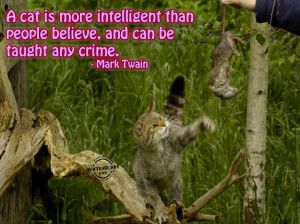 ... Cat Is More Smart Than People Believe A Intelligent Quotes About Love