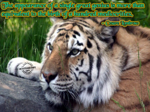 ... Quotes: Appearance Of A Great Genius Quote With Capture Of Wild Tiger