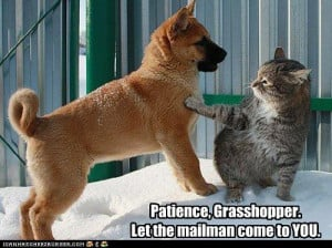 ... http://files.walerian.info/file/Funny/Animals/patience-grasshopper.jpg