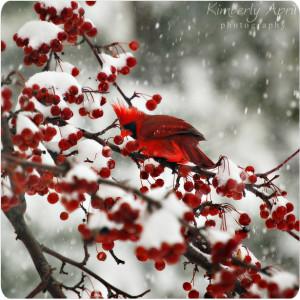 Winter Etching Spring Season For...
