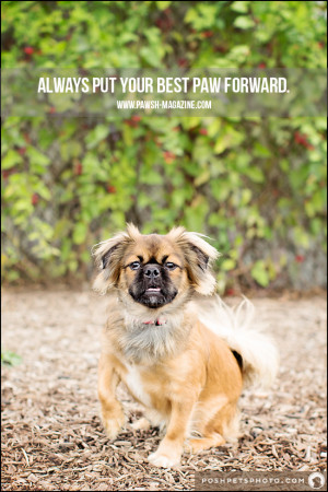 AS DOGS WOULD SAY: DOG QUOTE 19 | Pawsh MAGAZINE & STUDIO
