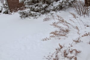 ... of them planted along this border, under that snow. Do you see them