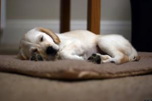 SLEEP-QUOTES-facebook.jpg
