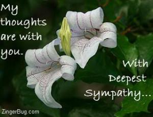 sympathy photo: sympathy sympathy_orchids.jpg