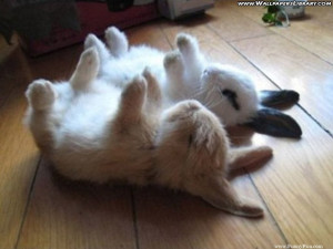 Funny Cute Rabbits – Funny Cute Rabbit Picture 105 (FunnyPica.com)