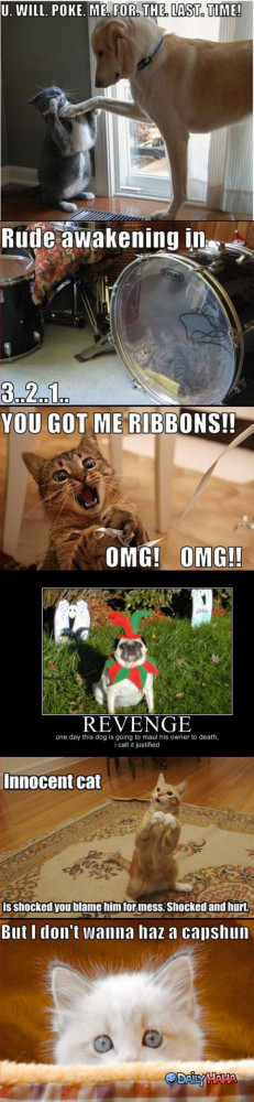 Funny Animal Pictures Quotes: Animals Conversation Very Funny Animal ...