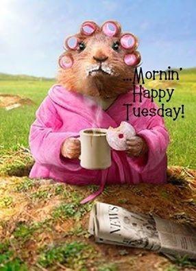 125267-Morning-Happy-Tuesday.jpg#Happy%20Tuesday%20286x395