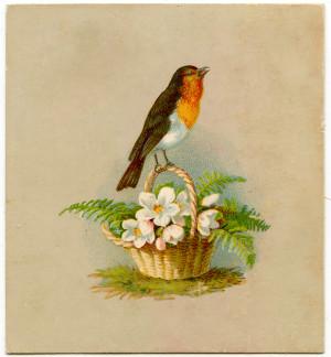 Vintage Graphic – Darling Robin on Basket – Holiday
